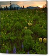 Rainier Wildflower Light Canvas Print