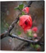 Raining Day Blossom  Canvas Print