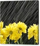 Raining On Yellow Daisies Canvas Print