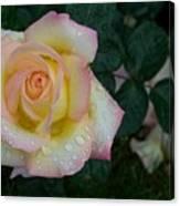 Rainy Day Rose Canvas Print