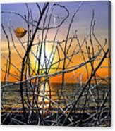 Raising Branches Canvas Print
