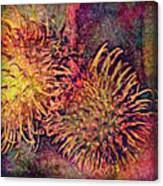 Rambutan Canvas Print