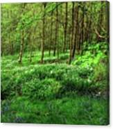 Ramsons And Bluebells, Bentley Woods Canvas Print