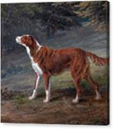 Ranger A Setter The Property Of Elizabeth Gray Canvas Print