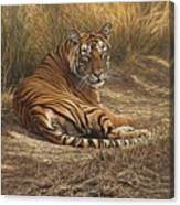 Ranthambore Roadblock Canvas Print