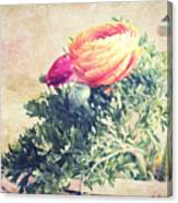 Ranunculus Stilllife Canvas Print