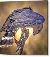 Raptor 22 Canvas Print