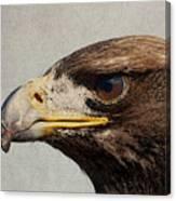 Raptor Wild Bird Of Prey Portrait Closeup Canvas Print