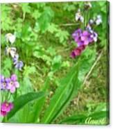 Rare Parry Primrose Spring Inlet Trampas Lake Nm Canvas Print