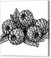 Raspberries Image Canvas Print