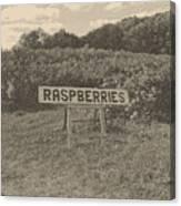 Raspberry Fields  Canvas Print
