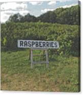 Raspberry Fields Three Canvas Print