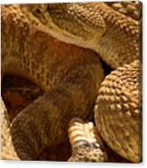 Rattlesnake And Rattle Canvas Print