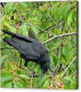 Raven In The Cherry Tree Canvas Print
