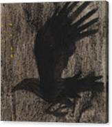 Raven In The Night With Ochre Canvas Print