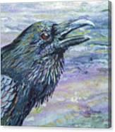 Raven Study 4 Canvas Print
