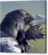 A Raven - Windblown Canvas Print