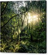 Ray Of Light Through Green Canvas Print