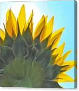 Ray Of Sunflower Canvas Print
