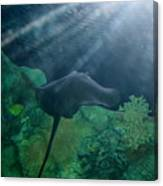 Ray To Rays Canvas Print