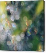 Rays Up Close Canvas Print