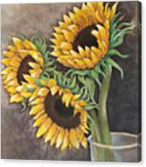 Reaching Sunflowers Canvas Print