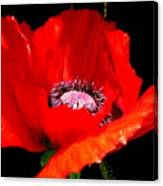 Red Poppy Photograph Canvas Print