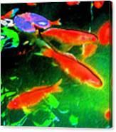 Real Gold Fish Canvas Print