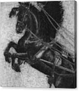Rearing Horses Canvas Print