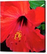 Reb Hibiscus Flower Canvas Print