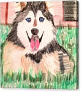 Rebel The Husky  Canvas Print