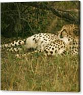 Reclining Cheetah Profile Canvas Print