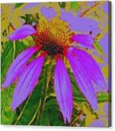 Recolored Echinacea Flower Canvas Print