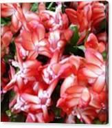 Red Abundance Canvas Print