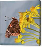 Red Admirable Butterfly Canvas Print
