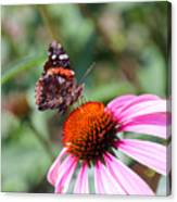 Red Admiral 1543 Canvas Print