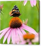Red Admiral And Cone Flowers Canvas Print