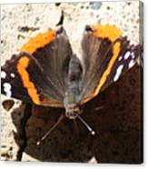 Red Admiral Close Canvas Print