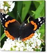 Red Admiral - Topwings Canvas Print
