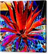 Red Agave Canvas Print