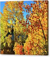 Red And Golden Aspens In Dillon Co Canvas Print
