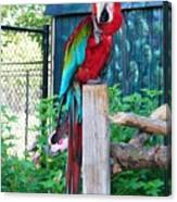 Red  And  Green Macaw         Zoo      Indiana Canvas Print