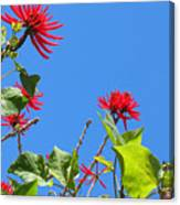 Red And Green San Diego Flowers Canvas Print