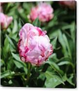 Red And Pink Peony Canvas Print
