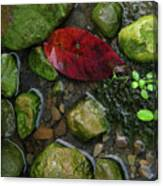 Red And Rocks Canvas Print