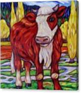 Red And White Bull Calf Canvas Print