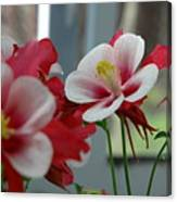 Red And White Flower Canvas Print