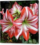 Red And White Lilies Canvas Print