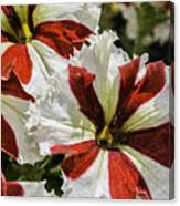 Red And White Petunia Canvas Print