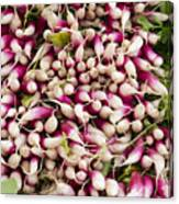 Red And White Radishes Canvas Print